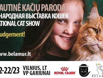 Tarptautinė kačių paroda Vilniuje 2020 metai