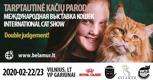 Tarptautinė kačių paroda/ International cat show