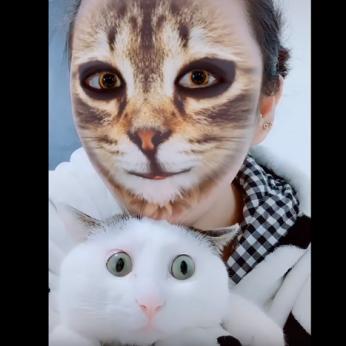 Interneto hitas: keturkojų reakcija į šeimininkų veidus privers kvatotis