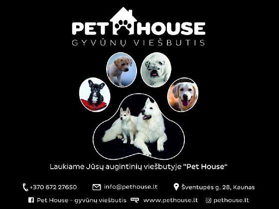 Šuniukų ir katinėlių apgyvendinimas gyvūnų viešbutyje Pet House