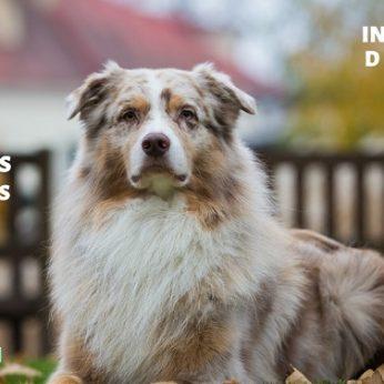 Tarptautinės šunų parodos Vilniuje