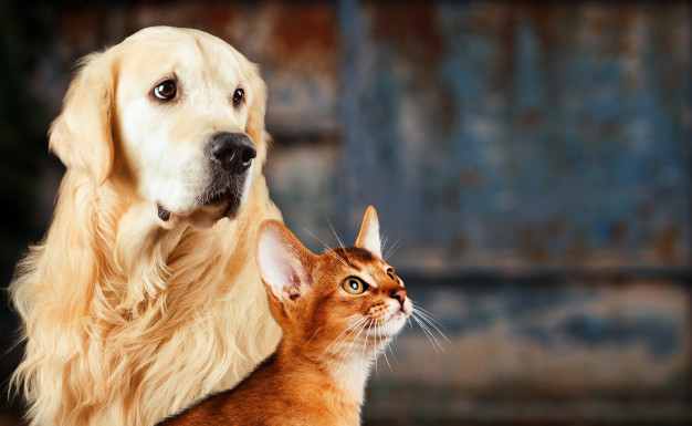 Europarlamentarai siekia įvesti privalomą kačių ir šunų ženklinimą
