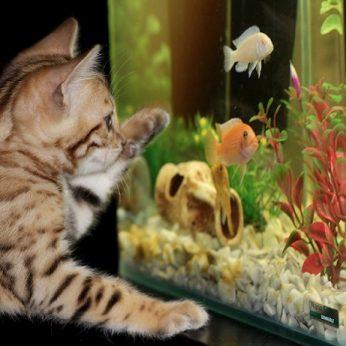 Kaip įsirengti jaukų akvariumą: patarimai pradedantiesiems