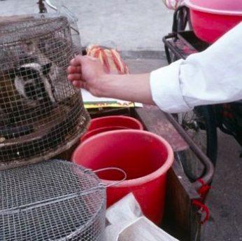 Koronavirusas: nelegali laukinių gyvūnų prekyba ir nekontroliuojami Kinijos turgūs
