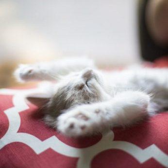 Nagų šalinimas – skausminga katės kasdienybė dėl materialinės šeimininkų gerovės