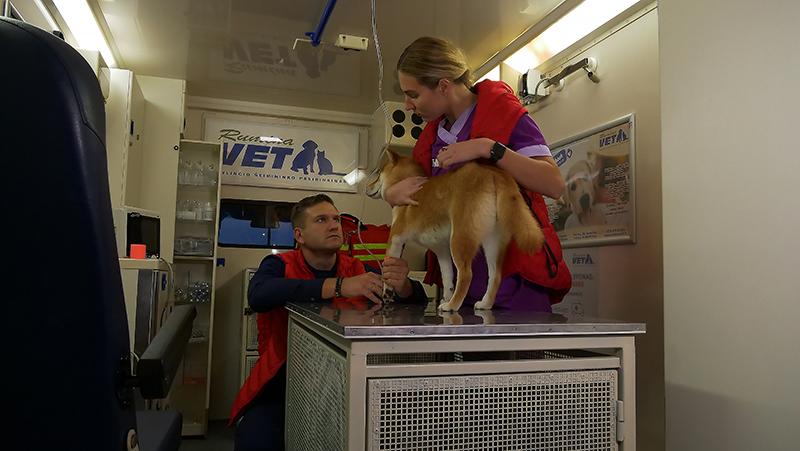 Pirmoji Lietuvoje greitoji medicinos pagalba gyvūnams
