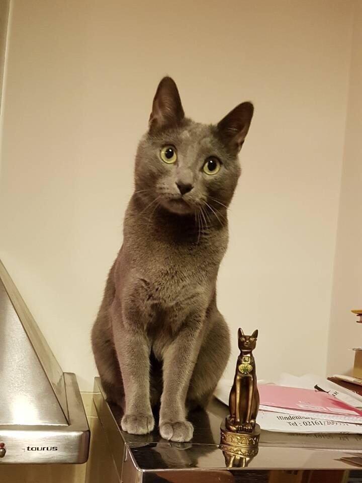 Sostinėje dingo katinas Martynas. Asmeninio archyvo nuotr.
