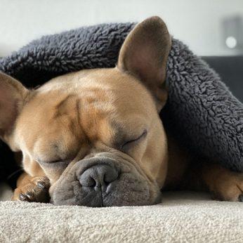 10 būdų pagerinti Jūsų šuns miegą!