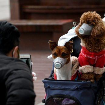 Dar kartą ištirtas dėl koronaviruso karantinuotas šuo po ilgų diskusijų artėjama prie išvados