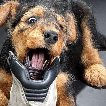 Erzinančios šuns elgsenos problemos ir lengvi būdai jas išspręsti