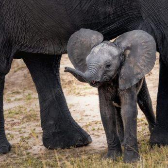 Laukinių gyvūnų prieglaudos – reali pagalba ar spąstai turistams?