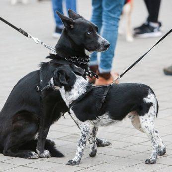 Saviizoliazijoje esantiems šunų augintojams – svarbus priminimas: tai daryti draudžiama