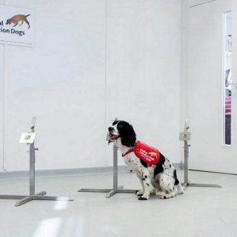 Šunys bus mokomi užuosti koronavirusą: nustatys net besimptomius atvejus