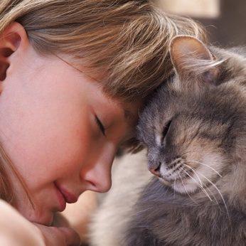 Mokslininkai jūsų asmenybė lemia ir jūsų katės gerbūvį