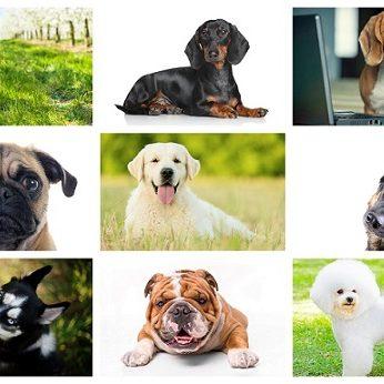 Pasirinkite vieną iš 9 šunų veislių: tai atskleis tam tikras jūsų charakterio savybes