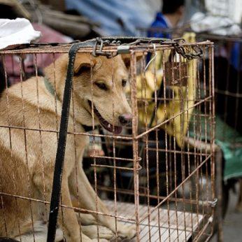 Po koronaviruso protrūkio paskelbtas pirmasis Kinijos miestas, uždraudęs valgyti kates ir šunis