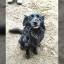 Šuns ištikimybė Panevėžyje mirus šeimininkui iš kitų pabėgdavo ir grįždavo keliasdešimt kilometrų