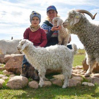 Ūkininkės sodyboje – egzotiškiausios ožkos