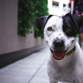 Žingsnis teisinga kryptimi – Kinijoje šunys pagaliau pripažinti augintiniais