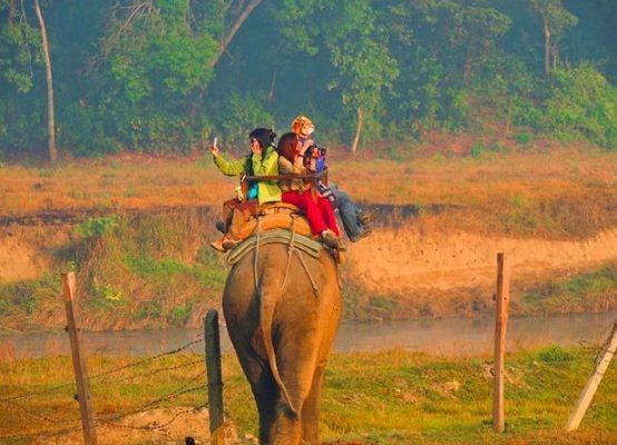 5 dalykai, susiję su gyvūnais, kurių verčiau vengti keliaujant