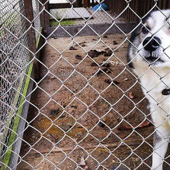 Ankštame ir pilname išmatų voljere įkalintas šuo godžiai gėrė pasiūlyto vandens