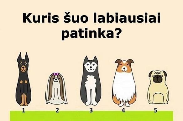 Kuris šuo labiausiai patinka? Štai ką reiškia jūsų pasirinkimas