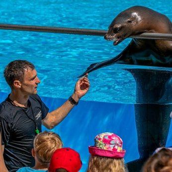 Lietuvos jūrų muziejuje atnaujinami delfinų ir jūrų liūtų pasirodymai