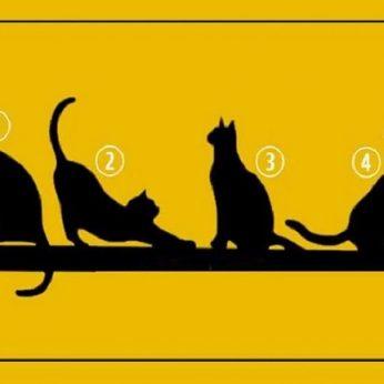 Pasirinkite katę: sužinosite apie save svarbų dalyką
