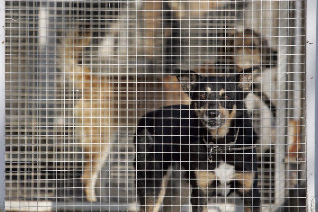 atikrinimo metu nustatyta, kad įmonė neturi gyvūnų globos vietoms suteikiamo veterinarinio patvirtinimo. V.Balkūno nuotr.