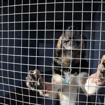 Patikrino beglobius gyvūnus prižiūrinčią įmonę: sąlygos pašiurpino