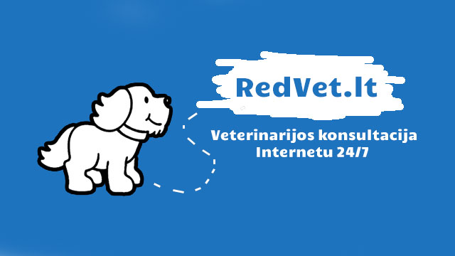 RedVet - nemokama veterinarinė konsultacija internetu