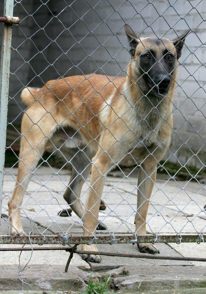 Patikrinimo metu nustatyta, kad įmonė neturi gyvūnų globos vietoms suteikiamo veterinarinio patvirtinimo. V.Balkūno nuotr.