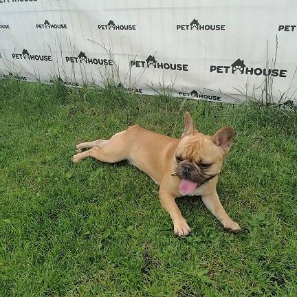 Šunų apgyvendinimas Pet House viešbutyje
