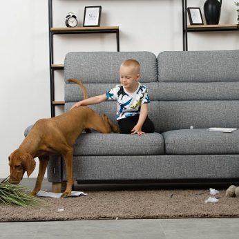 Amžinas klausimas kaip išsaugoti baldus, jei namuose yra augintinių