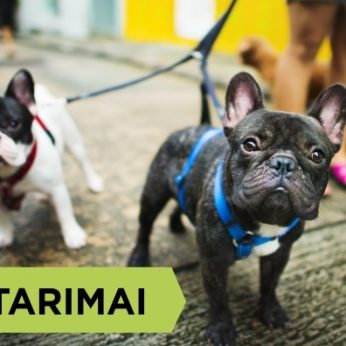 Būtiniausia šuns amunicija: antkaklis, pavadėlis, petnešos. Kaip išsirinkti?