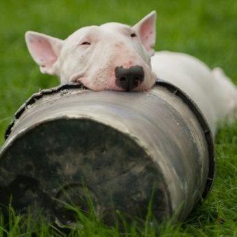 Dėl šunų gerovės pažeidimų suspenduota žinomo veislyno EOS TANAGROS veikla