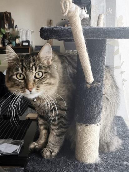 Dovanojamas mielas katiniukas