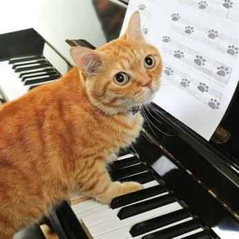 Mokslininkai sukūrė muziką, skirtą būtent katėms