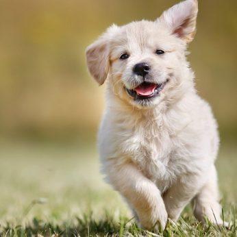Paaiškėjo populiariausia šunų veislė – viršūnėje jau beveik 30 metų!