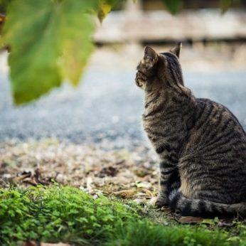 Pagauk sterilizuok paleisk beglobių kačių sterilizavimo programa Lietuvoje