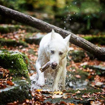 Tris paras liūne įklimpusį pensininką išgelbėjo ištikimas šuo