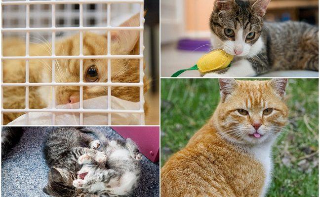 10 priežasčių, kodėl turėtumėte išgelbėti katinėlį iš prieglaudos