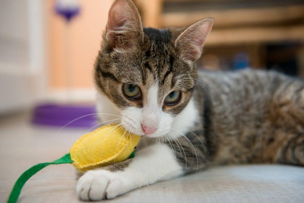 10 priežasčių, kodėl turėtumėte išgelbėti katinėlį iš prieglaudos. J.Stasevičiaus nuotr.
