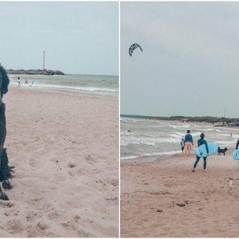Klaipėdos pajūryje – šunų paplūdimys kviečia smagiai pailsėti su keturkojais draugais