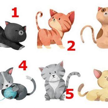 Kuris kačiukas panašiausias į jus? Sužinosite neįtikėtinai daug tiesos