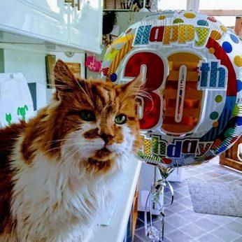 Nugaišo seniausias pasaulio katinas: žmogui tai prilygtų 150 metų gyvenimo