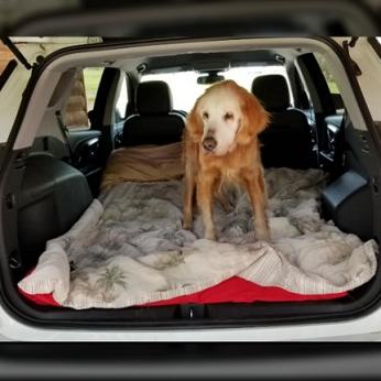 Pasiektas įspūdingas šuns amžiaus rekordas