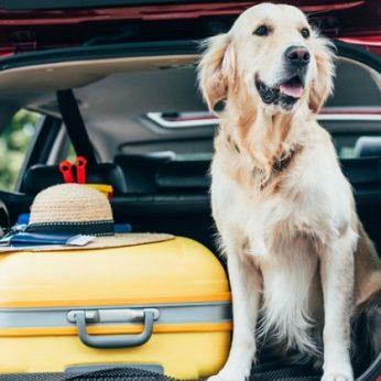 Šuo automobilyje kada vasaros kelionės augintiniui kelia pavojų