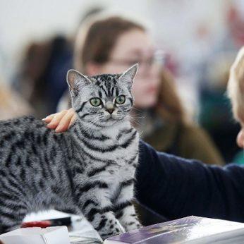 Atsakė, kodėl vieni žmonės myli gyvūnus, o kiti – ne