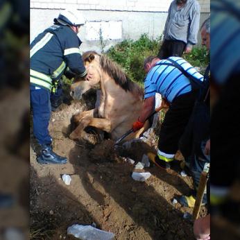 Gelbėjimo operacija Kėdainių rajone – ugniagesiai traukė į šulinį įkritusį arklį